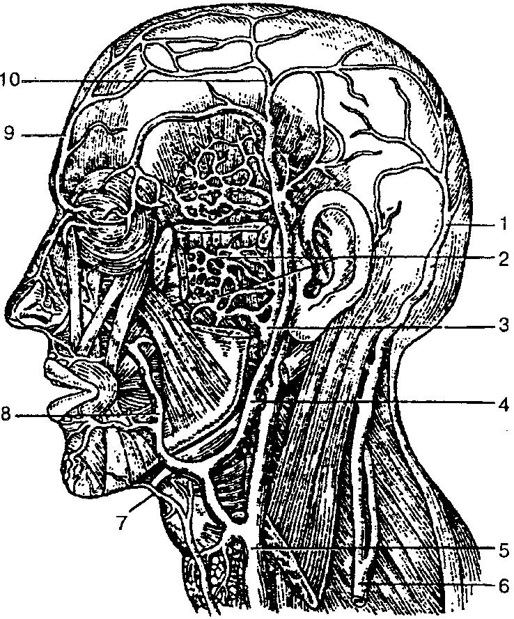 Система Гаверсова