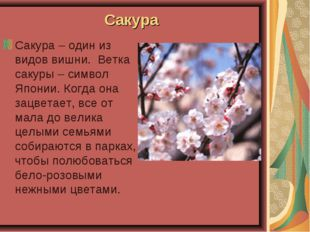 Сакура Сакура – один из видов вишни. Ветка сакуры – символ Японии. Когда она