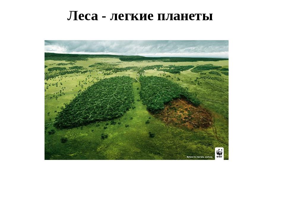 Леса - легкие планеты