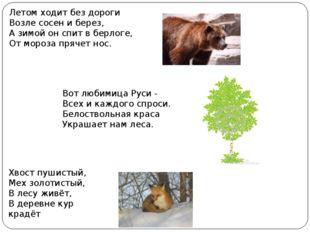 Летом ходит без дороги Возле сосен и берез, А зимой он спит в берлоге, От мо