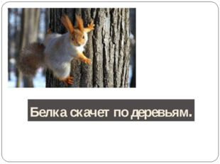 Белка скачет по деревьям.