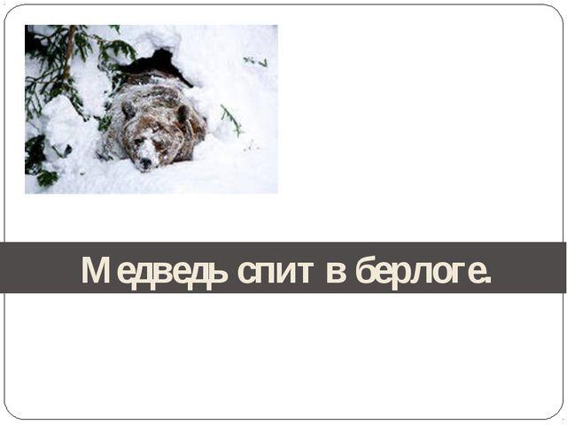 Медведь спит в берлоге.