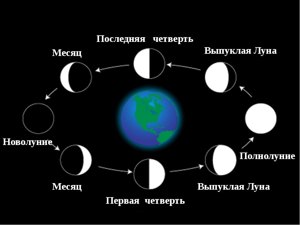 Месяц Новолуние Месяц Первая четверть Выпуклая Луна Полнолуние Выпуклая Луна...