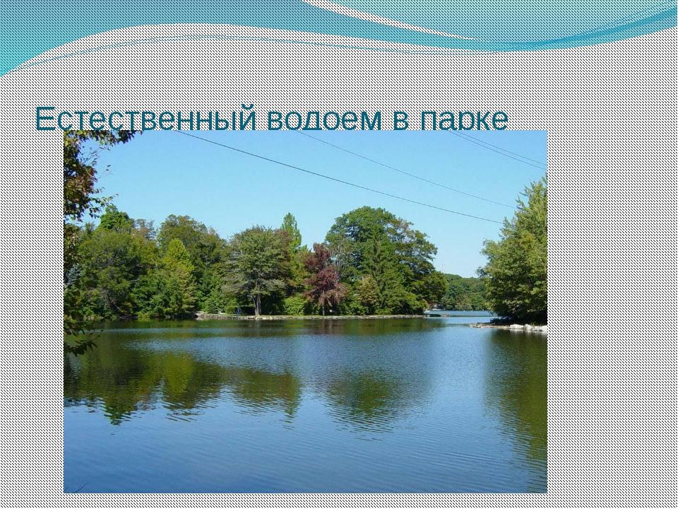 Естественный водоем в парке