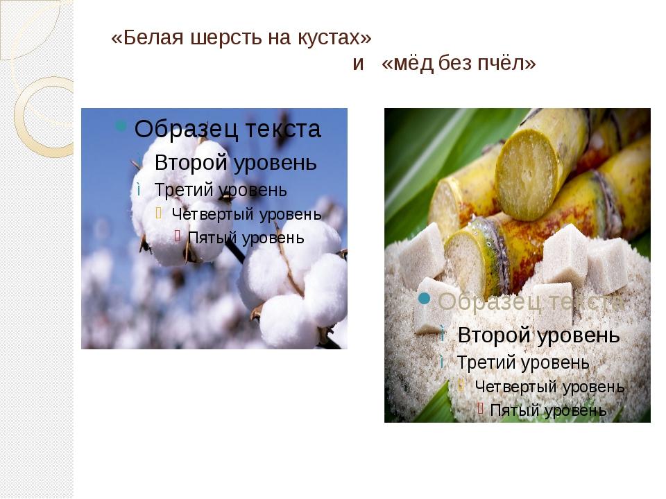«Белая шерсть на кустах» и «мёд без пчёл»