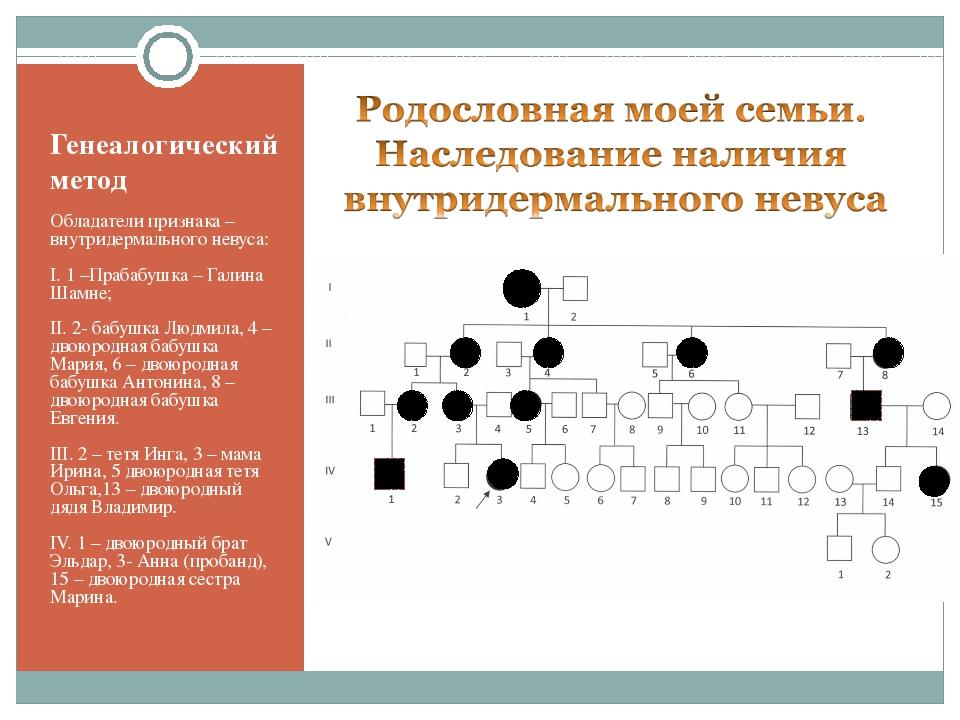 Генеалогический метод Обладатели признака – внутридермального невуса: I. 1 –П...