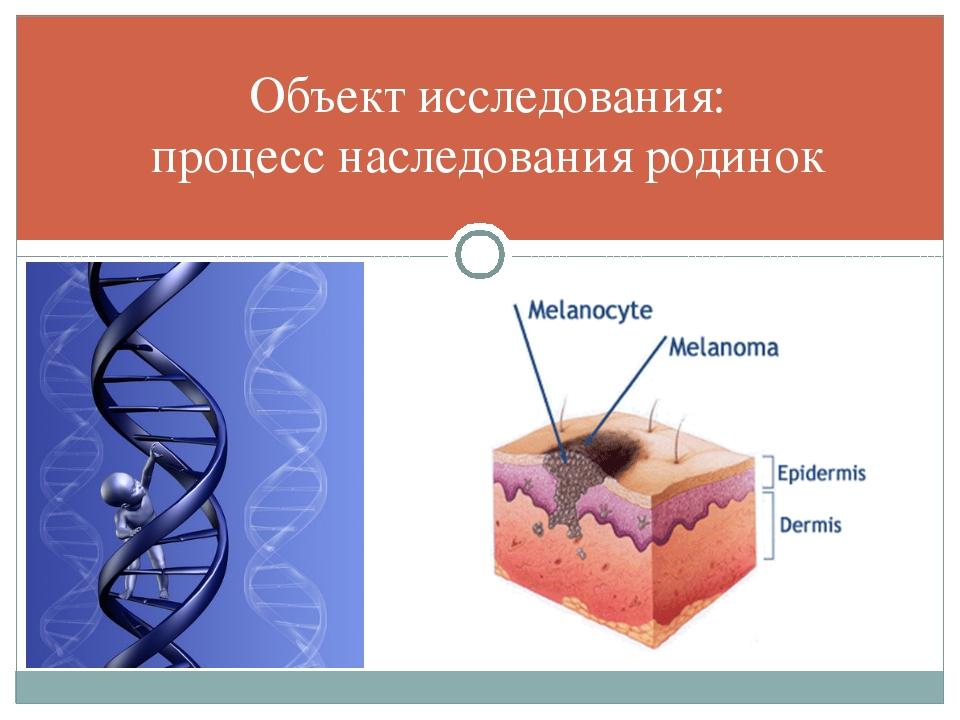 Объект исследования: процесс наследования родинок