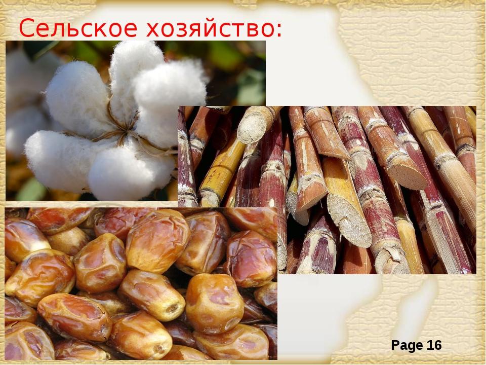 Сельское хозяйство: Page