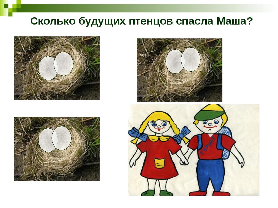 Сколько будущих птенцов спасла Маша?
