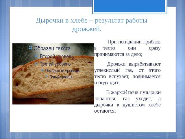 Дырочки в хлебе – результат работы дрожжей. При попадании грибков в тесто они...