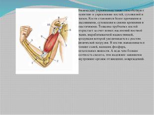 Физические упражнения также способствуют развитию и укреплению костей, сухож