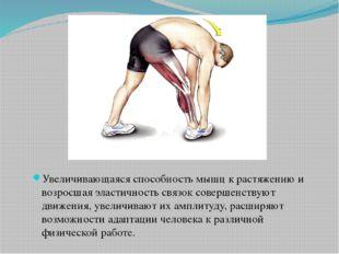 Увеличивающаяся способность мышц к растяжению и возросшая эластичность связо
