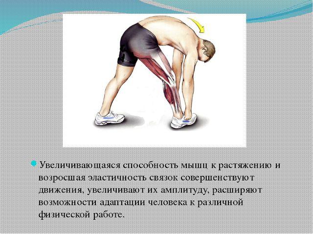 Увеличивающаяся способность мышц к растяжению и возросшая эластичность связо...