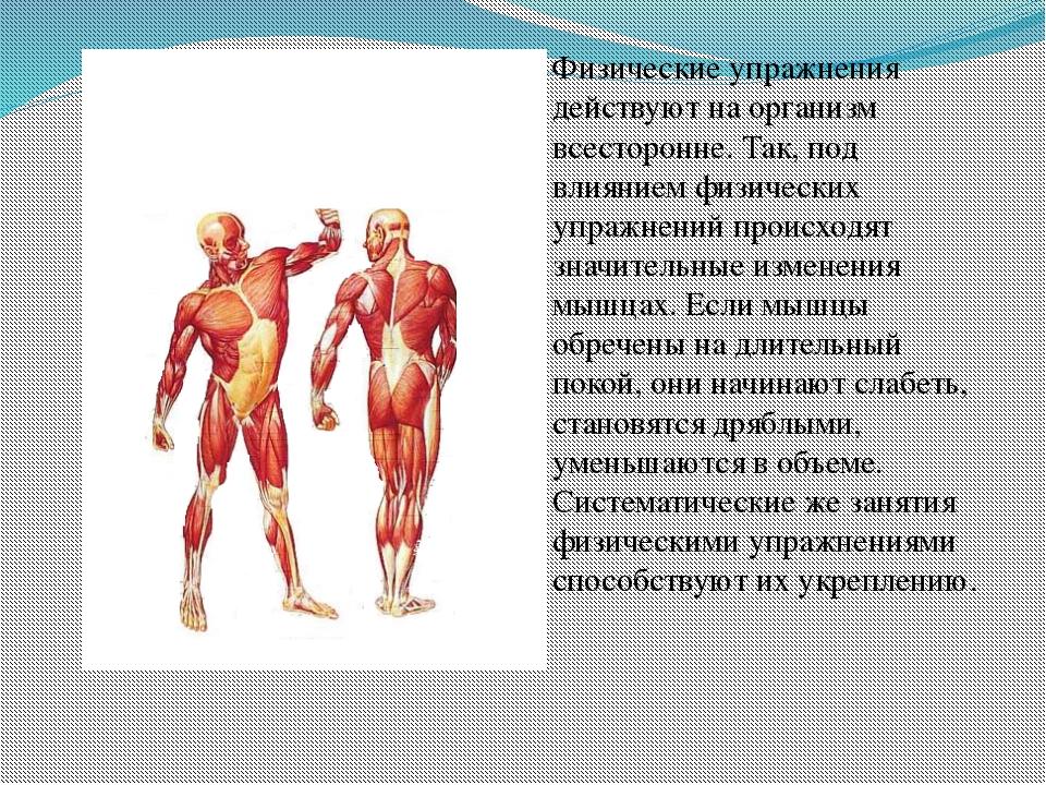 Физические упражнения действуют на организм всесторонне. Так, под влиянием ф...