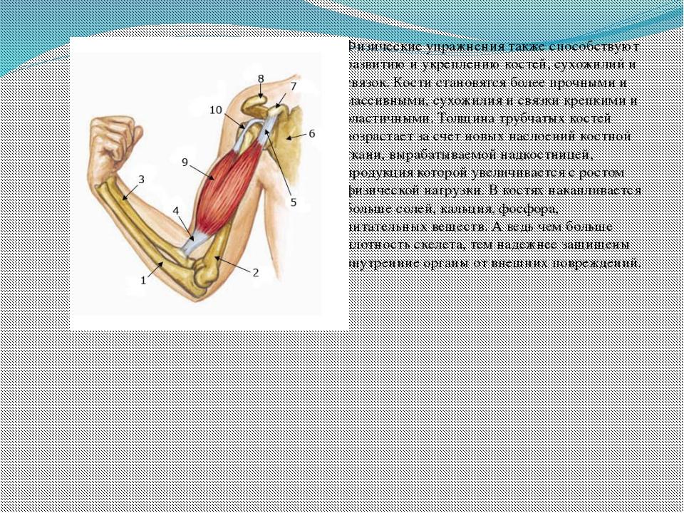 Физические упражнения также способствуют развитию и укреплению костей, сухож...