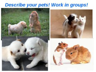 Describe your pets! Work in groups!