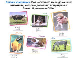 Клички животных. Вот несколько имен домашних животных, которые довольно попул
