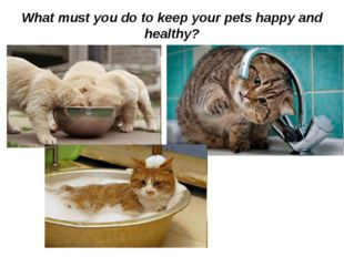 What must you do to keep your pets happy and healthy?