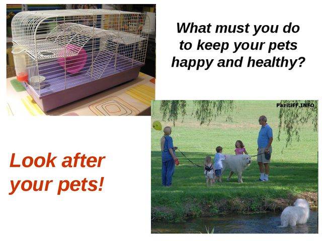 What must you do to keep your pets happy and healthy? Look after your pets!