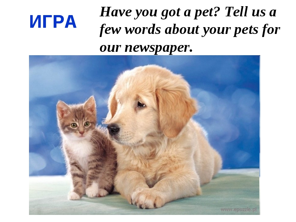 Have you got a pet? Tell us a few words about your pets for our newspaper. ИГРА