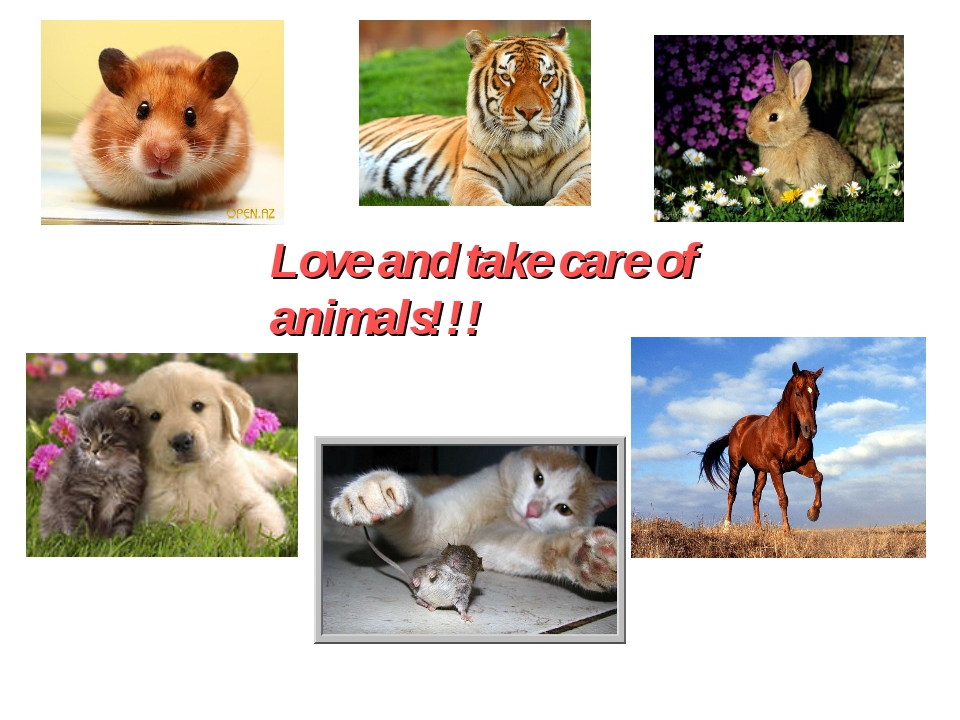 Love and take care of animals!!!