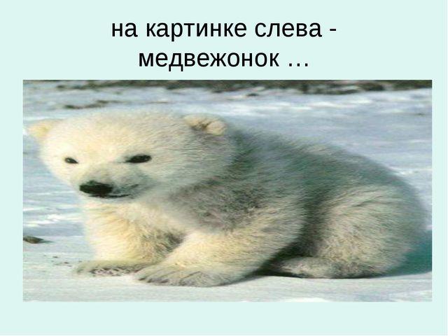 на картинке слева - медвежонок …