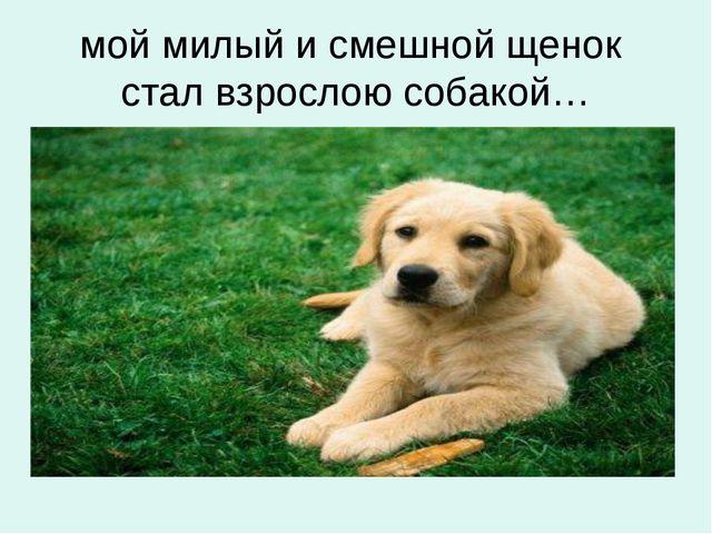 мой милый и смешной щенок стал взрослою собакой…