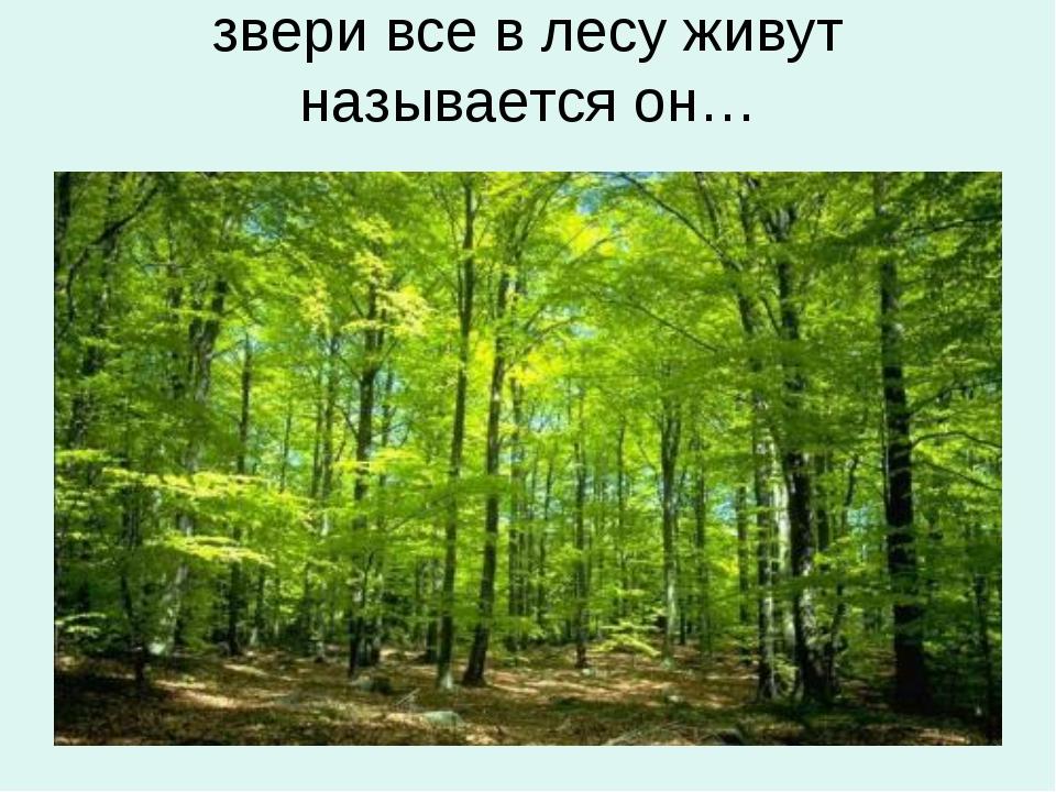 звери все в лесу живут называется он…