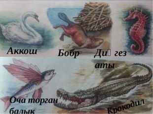 Аккош Бобр Диңгез аты Оча торган балык Крокодил