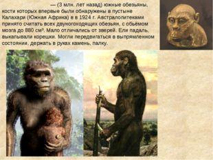 Австралопите́ки — (3 млн. лет назад) южные обезьяны, кости которых впервые б