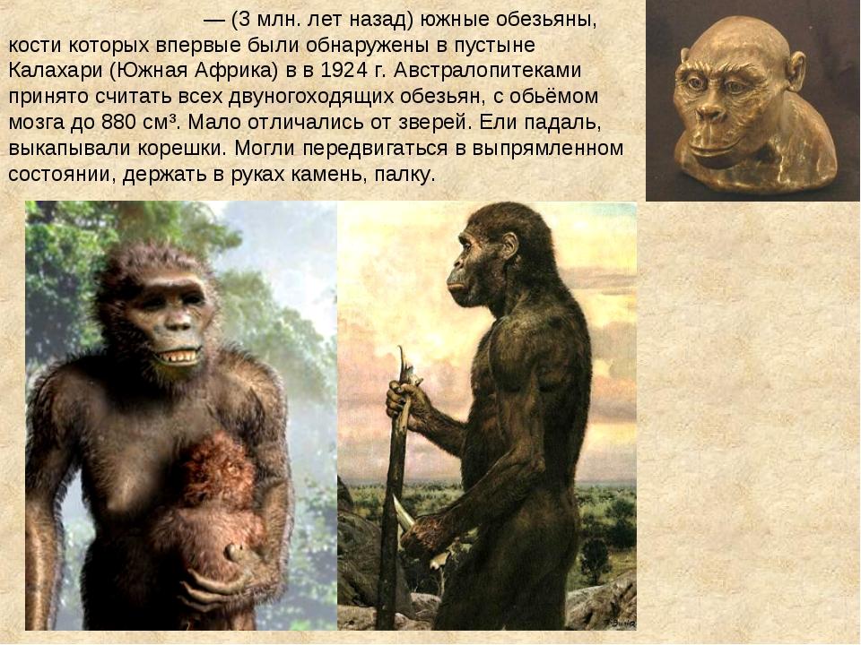 Австралопите́ки — (3 млн. лет назад) южные обезьяны, кости которых впервые б...