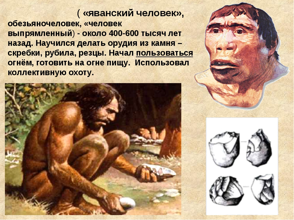 Питека́нтроп ( «яванский человек», обезьяночеловек, «человек выпрямленный)-...