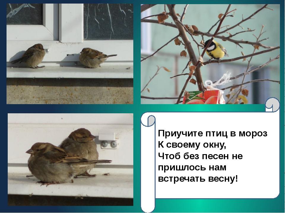 Приучите птиц в мороз К своему окну, Чтоб без песен не пришлось нам встречать...