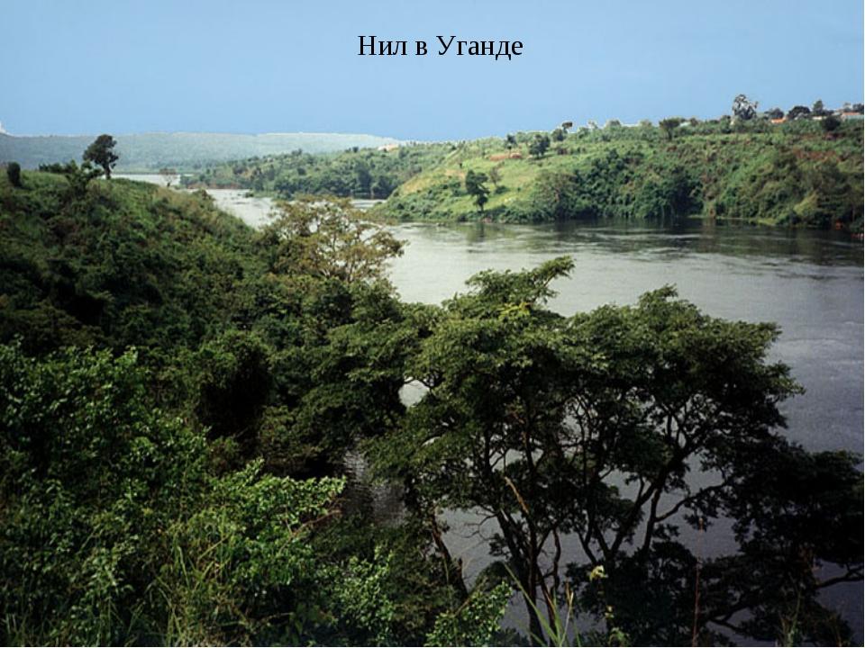 Нил в Уганде