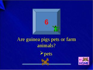 6 Are guinea pigs pets or farm animals? pets