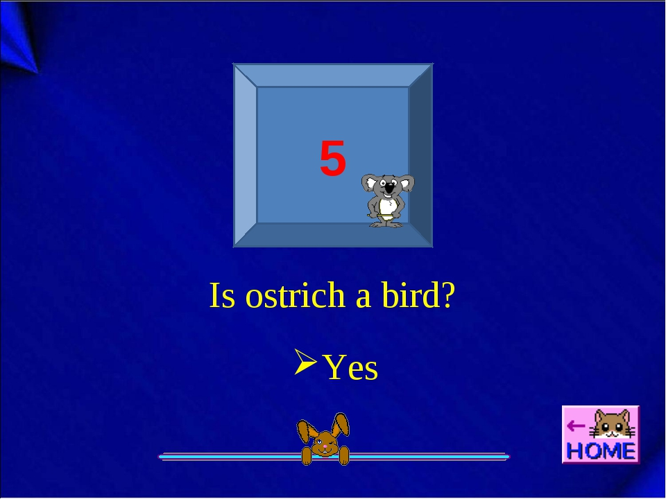5 Is ostrich a bird? Yes