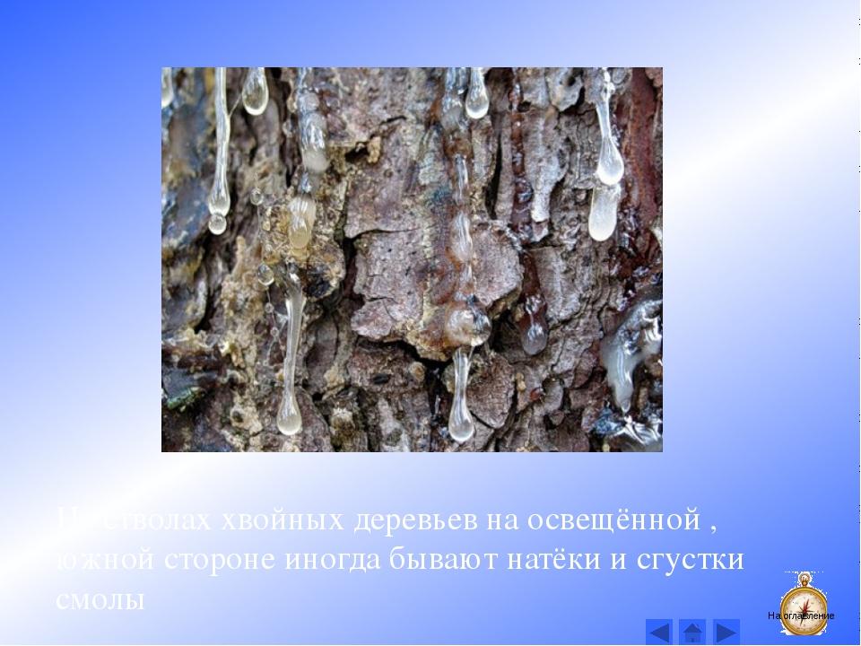 Годовые кольца на пнях деревьев расположены гуще с северной стороны. На оглав...