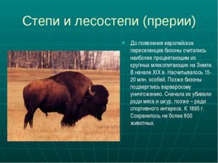 Степи и лесостепи (прерии) До появления европейских переселенцев бизоны счита
