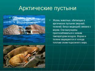 Арктические пустыни Жизнь животных, обитающих в арктических пустынях (моржей,