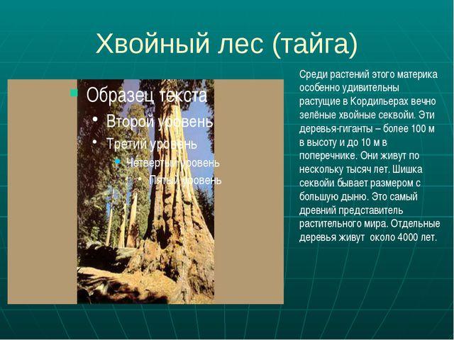 Хвойный лес (тайга) Среди растений этого материка особенно удивительны растущ...