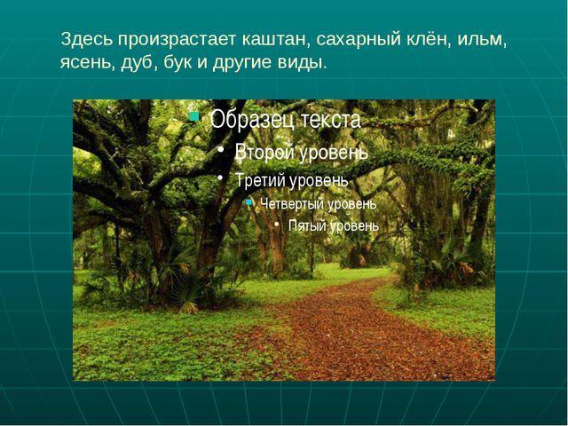 Здесь произрастает каштан, сахарный клён, ильм, ясень, дуб, бук и другие виды.