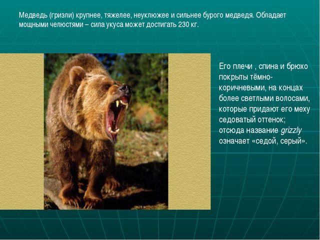 Медведь (гризли) крупнее, тяжелее, неуклюжее и сильнее бурого медведя. Облада...