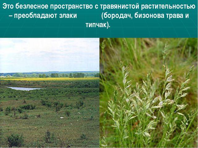 Это безлесное пространство с травянистой растительностью – преобладают злаки...