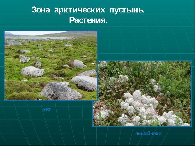 Зона арктических пустынь. Растения. мхи лишайники
