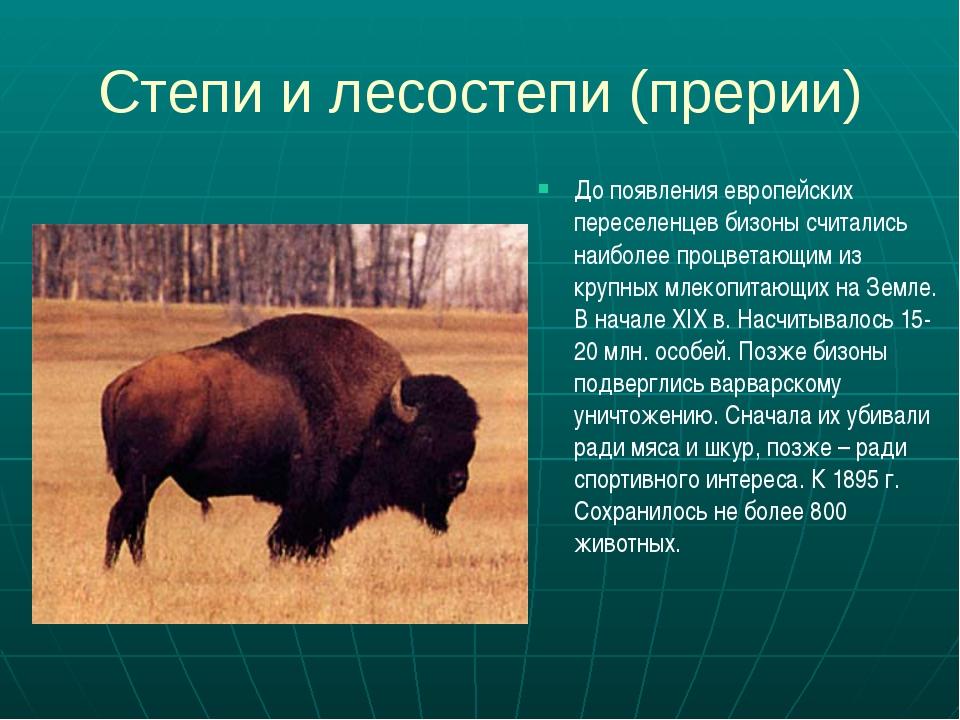 Степи и лесостепи (прерии) До появления европейских переселенцев бизоны счита...