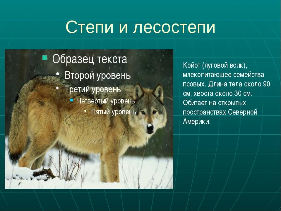 Степи и лесостепи Койот (луговой волк), млекопитающее семейства псовых. Длина...