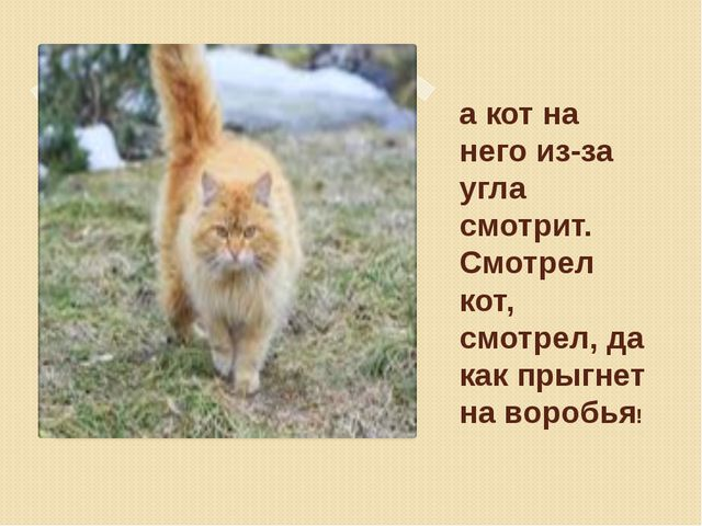 а кот на него из-за угла смотрит. Смотрел кот, смотрел, да как прыгнет на вор...