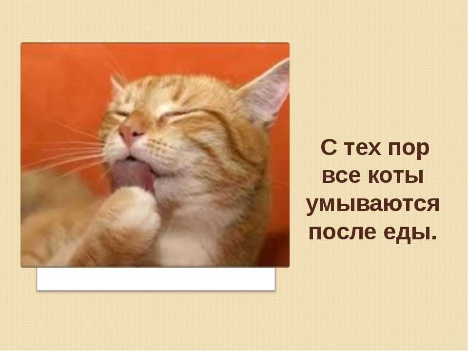 С тех пор все коты умываются после еды.