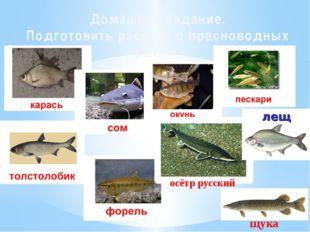 Домашнее задание. Подготовить рассказ о пресноводных рыбах. осётр русский щука