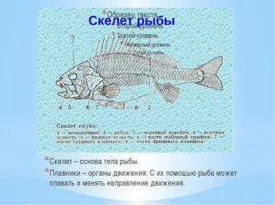 Скелет – основа тела рыбы. Плавники – органы движения. С их помощью рыба може